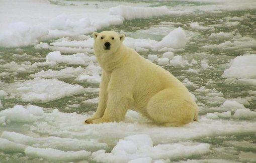 Gelo no Ártico vai sumir em 20 anos